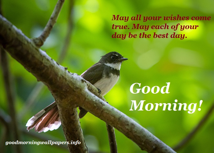 New Good Morning Bird Images