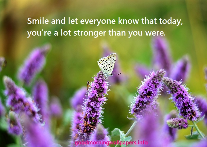 Purple Good Morning Butterfly