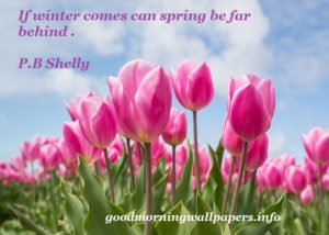Spring Quotes with Images