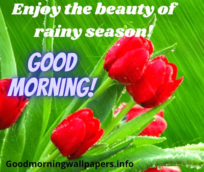 Happy Rainy Morning