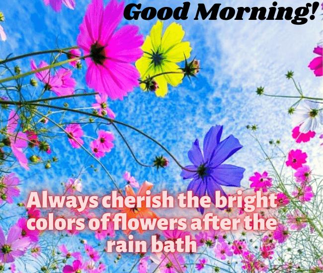 Rainy Good Morning Images HD