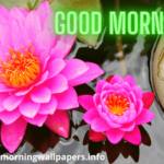 Beautiful Good Morning Lily Lotus Flower Images HD {Latest 2020 Collection}