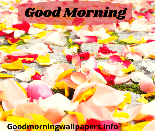 Beautiful Morning with Rose Petals