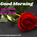 Good Morning Rose Wallpaper {Romantic HD Images Free Download}