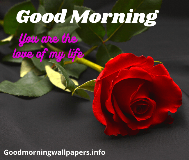 Good Morning Red Rose Full HD Wallpaper