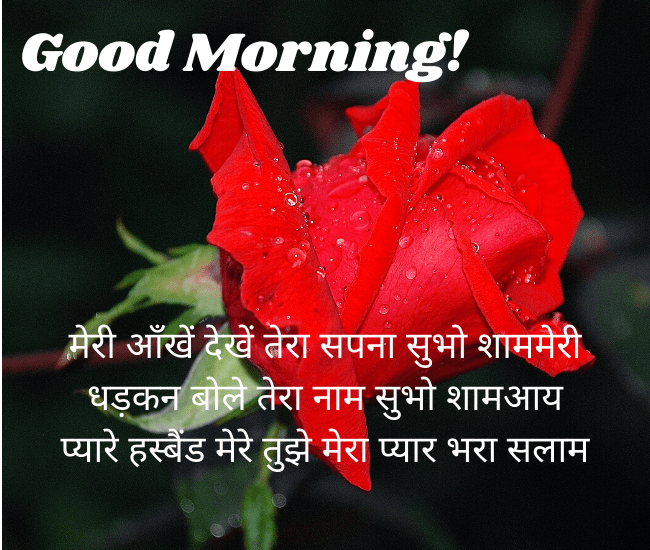 Good Morning Red Rose Shayari Image