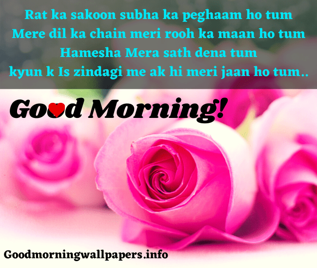 Good Morning Rose Wallpaper Shayari in Hindi