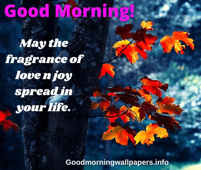 Hopeful Amazing Good Morning Image with Positive Vibes