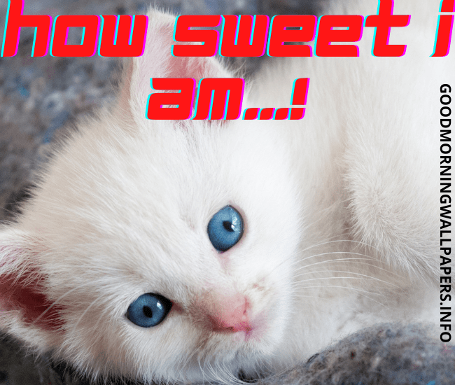 Good Morning Cat Images HD