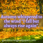 Cute Good Morning Fall Images 2021 {Happy Autumn Pictures}