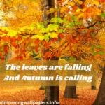 Good Morning Fall Quotes 2021 {Beautiful Autumn Wishes}
